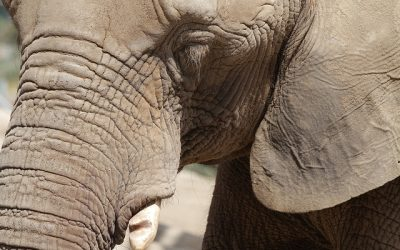 FACETS OF AN ELEPHANT